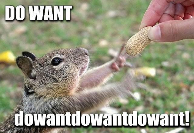 Squirrel Habit